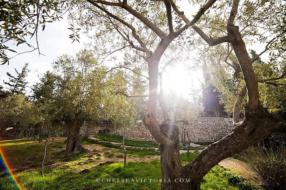 Israel Garden