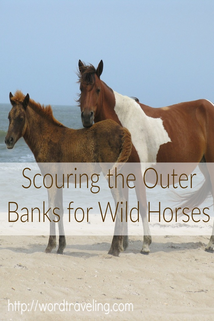 Scouring the Outer Banks for Wild Horses http://wordtraveling.com Hear how Wendy and her family adventured with Wild Horse Adventure Tours as a part of a weekend #travel vacation!